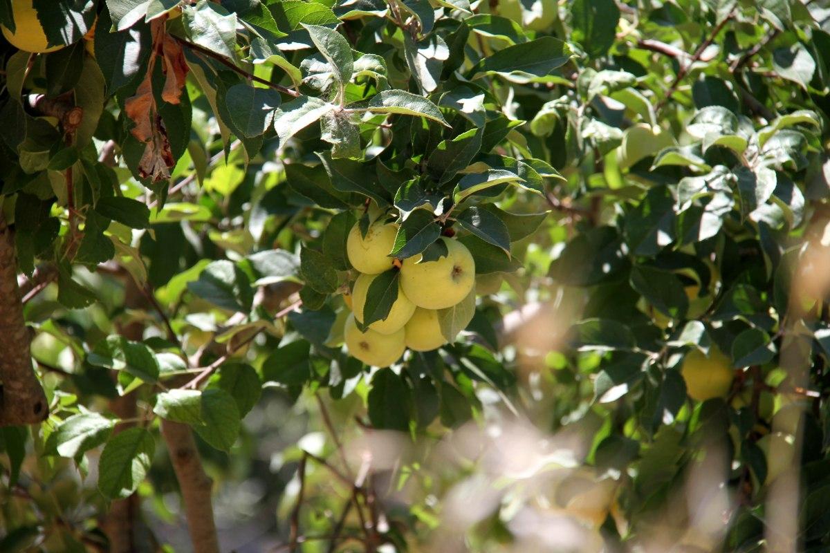 sicily_botanical